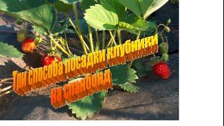 Три способа посадки клубники на спанбонде.  Уход за клубникой.(Преимущества такого способа выращивания клубники очевидны. Отпадает необходимость в многократных прополк..., 2016-04-24T23:04:55.000Z)