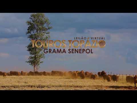 Convite Leilão Touros Senepol Topázio GRAMA.