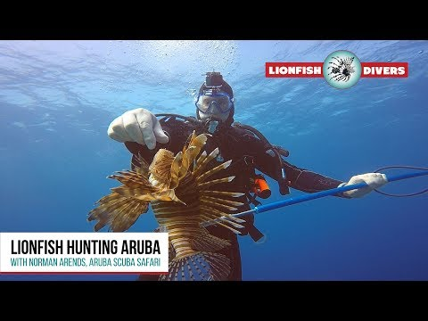 Lionfish Hunting Aruba - How To Save The Coral Reef Systems