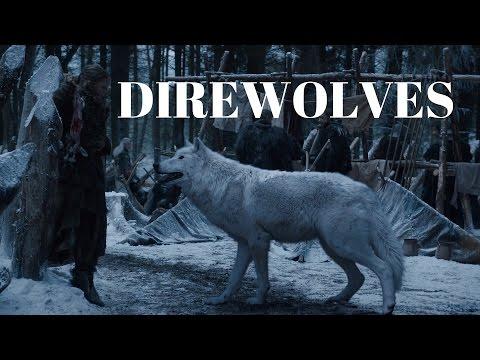 Game Of Thrones - ALL STARK DIREWOLF SCENES