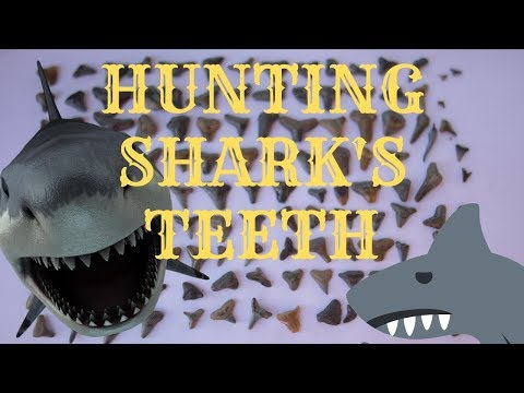 Hunting For Shark's Teeth In Florida - Nature's Treasure Chest