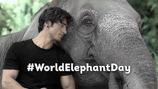#WorldElephantDay   Vidyut Jammwal   Junglee In Cinemas 5th April 2019