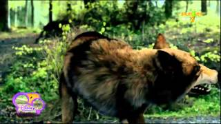 Maddy y Rhydian (Wolfblood, temporada 1)