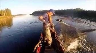 Lohestusta Tornionjoella Lappean Lomassa 11.8.2014 - Salmon fishing Lappean Loma 11.8.2014