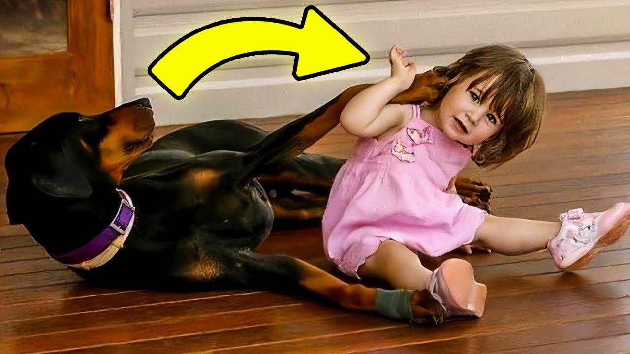 Este Cachorro Jogou uma Criança no Quintal. Quando a Mãe Viu o Porquê, Ela Não Acreditou