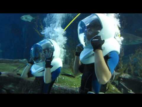 Ocean Walker @ Siam Ocean World 2014 09 08