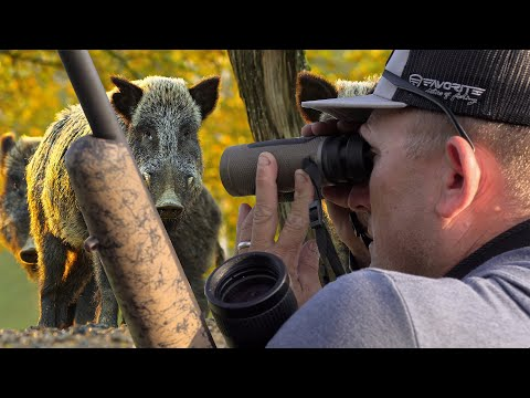 Wild Boar Hunting {Catch Clean Cook} A Massive Ranch Project
