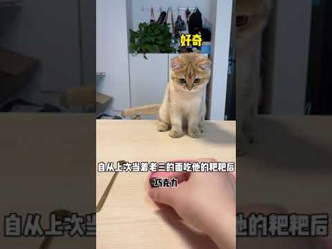【牛奶是只貓】救命!小老三就是個大孝子😭#Shorts