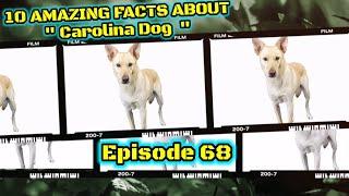 Top 10 fun facts about Carolina Dog.
