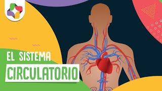 Del consejos circulatorio circulatorios sistema