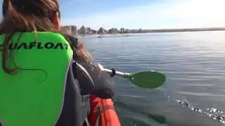 Video: Ballena levanta un kayak