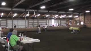 Sadie's First Agility Trial - Jumpers - Staffordshire Bull Terrier