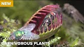 True Facts : Carnivorous Plants
