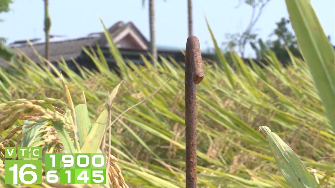 Phẫn nộ hành động đặt bãi chông trên đồng lúa   VTC16