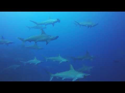 Cocos Island Dive Trip via GoPro