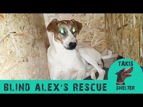 blind-dog-overcomes-depression-by-giving-birth---alex---takis-shelter