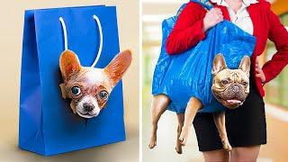 Как пронести животных в колледж Смешные трюки и пранки с животными