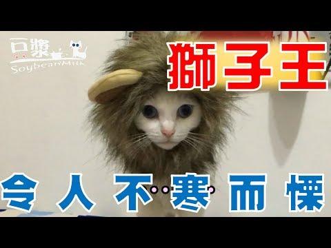 【豆漿 - SoybeanMilk】好可怕的獅子 盯得你心理發寒....