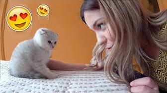 Johanna kauft 2 Baby Katzen! 😍