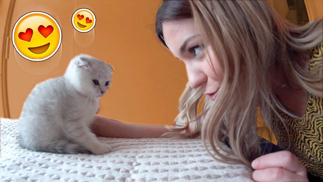 Johanna Kauft 2 Baby Katzen
