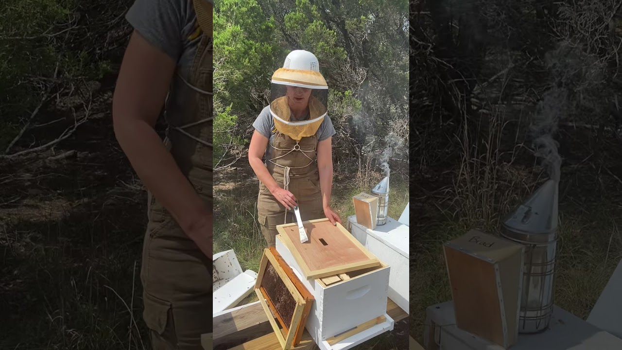 How To Install A Nucleus  Nuc  Hive Of Honey Bees