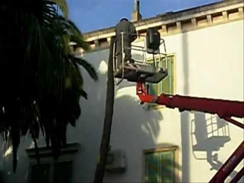 Otok Vis- sječa palmi