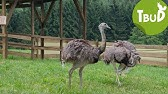 Zugvogel Folge 19 Tiere Bis Unters Dach Swr Kindernetz Youtube