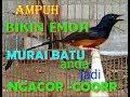 Wowww Ampuh Bikin Emosi Murai Batu Anda Jadi Ngacor  Mp3 - Mp4 Download