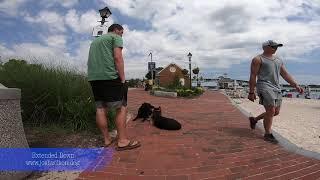 "German Shepherds ""Kieran and Rainer | Amazing Transformation! | Dog Trainers of Hampton Roads"