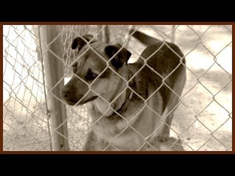 'The Goat Slayer' - Cesar Tames a Bloodthirsty Dog