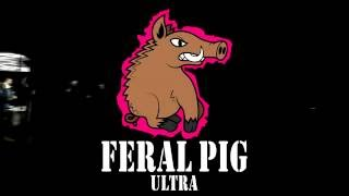 feral pig ultra 2016