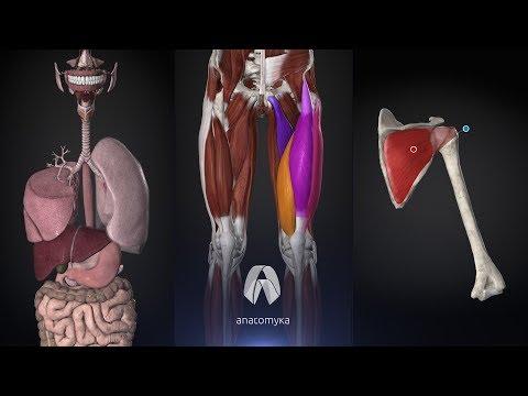 Anatomyka - 3D Human Anatomy Atlas - Apps on Google Play