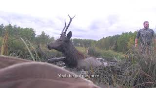 Incredible Bull Elk Rescued from Certain Death