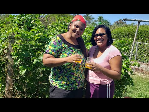 How To Make Passion Fruit Juice Caribbean Style By Lau Lau Aka Chef Pas Mele Youtube