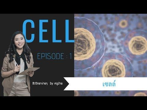เซลล์ ep-1 : ชีววิทยาง่ายๆ by ครูฝ้าย
