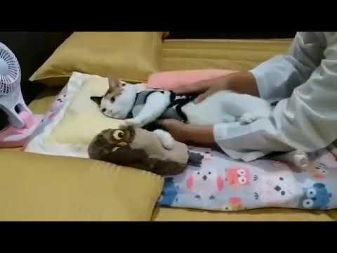 Kucing Lucu Banget Kalo Lagi Tidur Youtube
