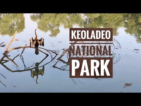 Birding at Keoladeo Ghana National Bird Sanctuary, Bharatpur , INDIA