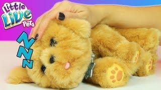 Oyuncak Köpek - Canım Köpeğim Snuggles | EvcilikTV En Yeni Oyuncaklar