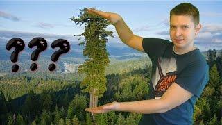 Czy drzewo może urosnąć na kilometr?