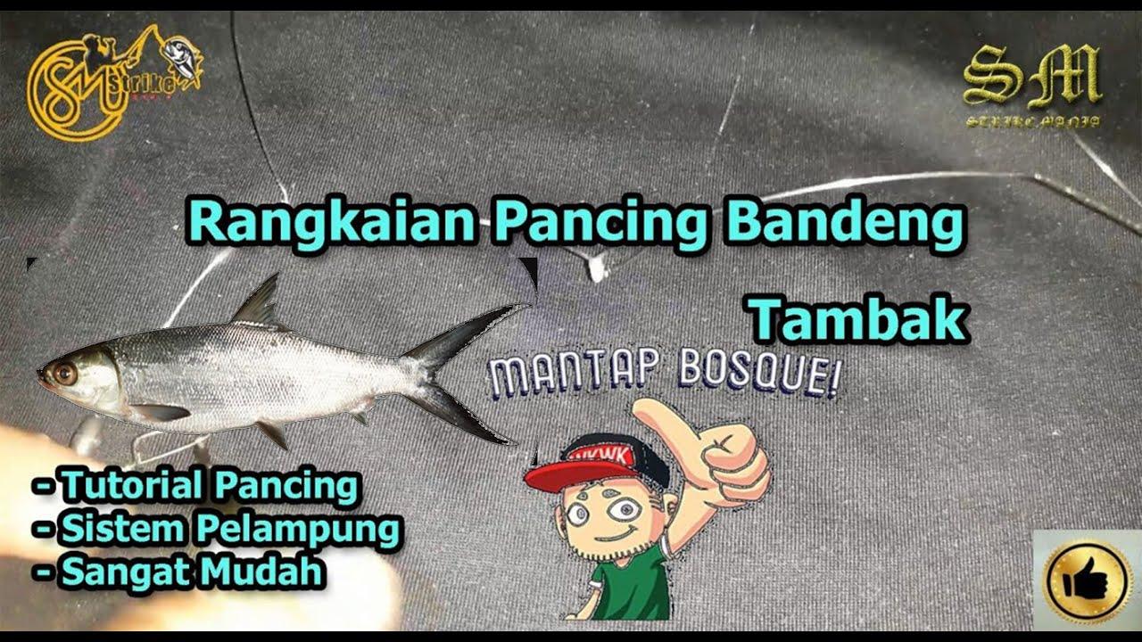 Tutorial Pancing Rangkaian Pancing Ikan Bandeng 3 Kail Youtube