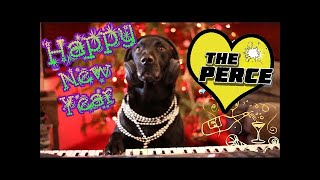 Percy The Black Labrador Wishing You All a Happy New Year Funny & Cute