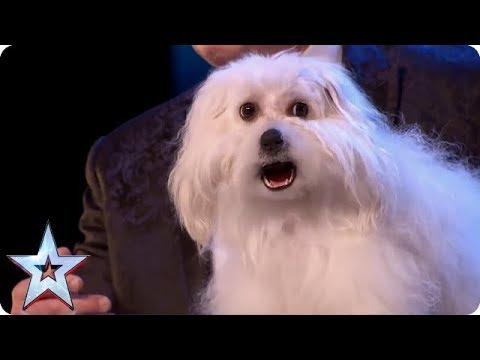 BEST ANIMALS EVER ON BGT! | Britain's Got Talent