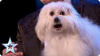 BEST ANIMALS EVER ON BGT! | Britain's Got Talent