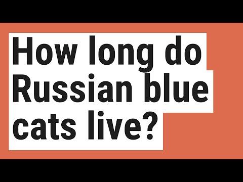 How long do Russian blue cats live?