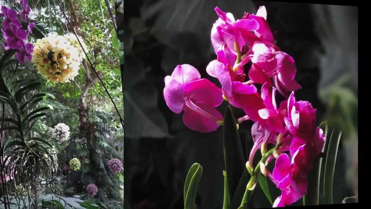 Mille et une orchidées Grande Serre du Jardin des plantes - YouTube