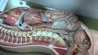 Week 6 pns Dr.Kim lab video