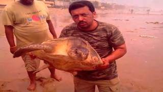 Ridley Sea Turtle Washed on Juhu Silver Beach