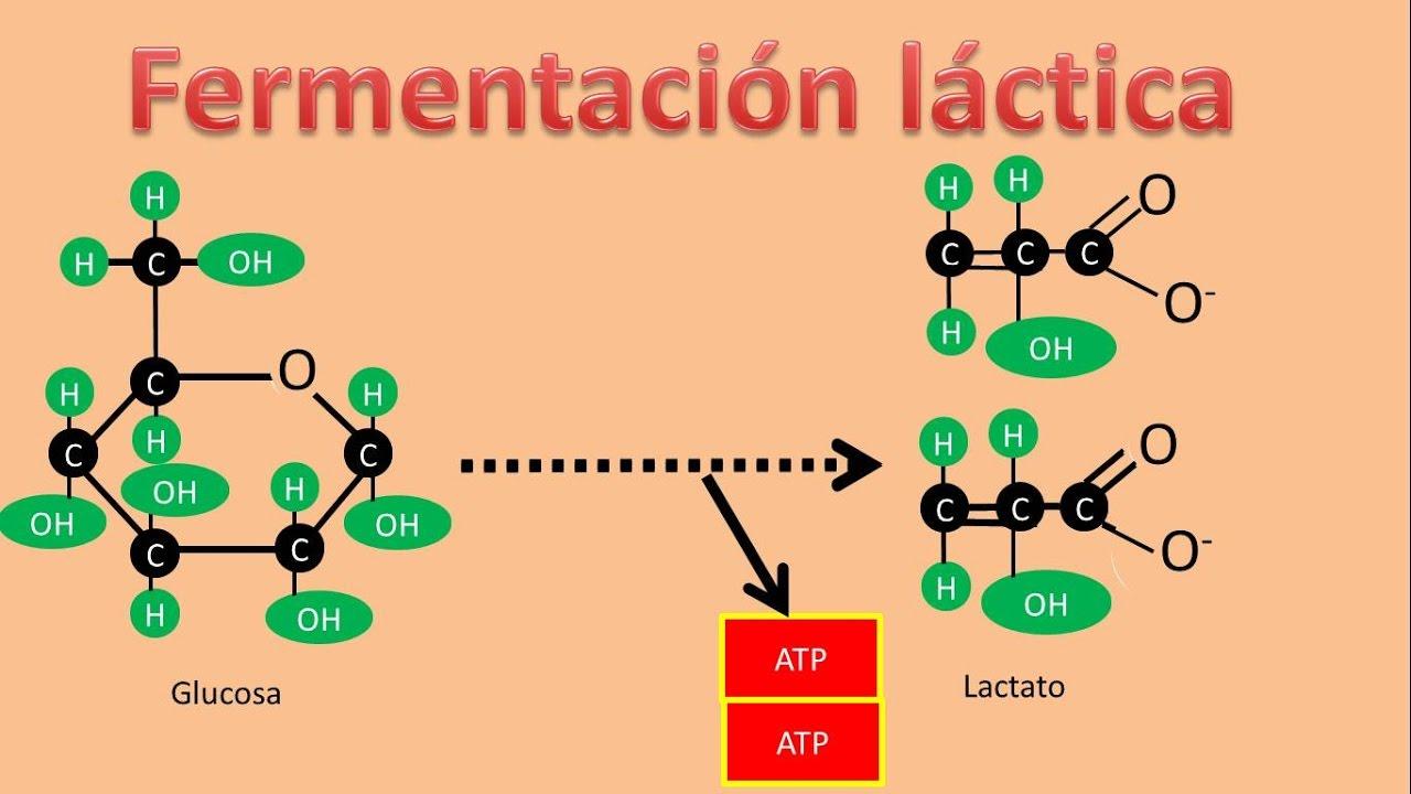 Deshidrogenasa Lactica Epub Download