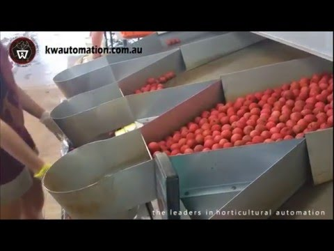 KW Automation - Lychee Processing Equipment