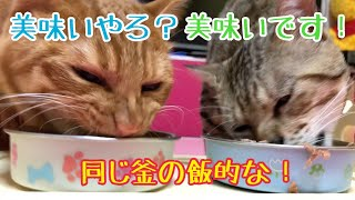 猫2匹の咀嚼音は最高!保護猫ココは初パウチ!かなり仲良くなりました!